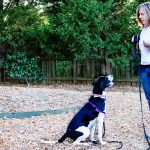 4 Techniques to Boost Your Dog Training
