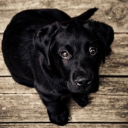 How to Prepare Your Home for a New Dog