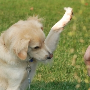 5 Ways Trick Training Can Help Your Dog
