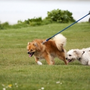 4 Positive Ways to Teach Your Dog to Heel