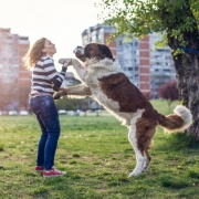 Large Dog Jumping